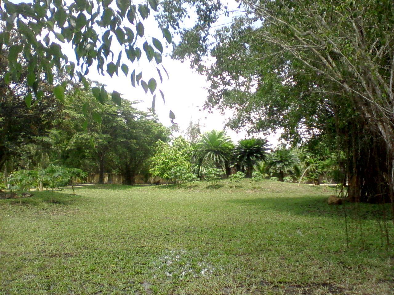 độ ẩm cho cỏ lá gừng