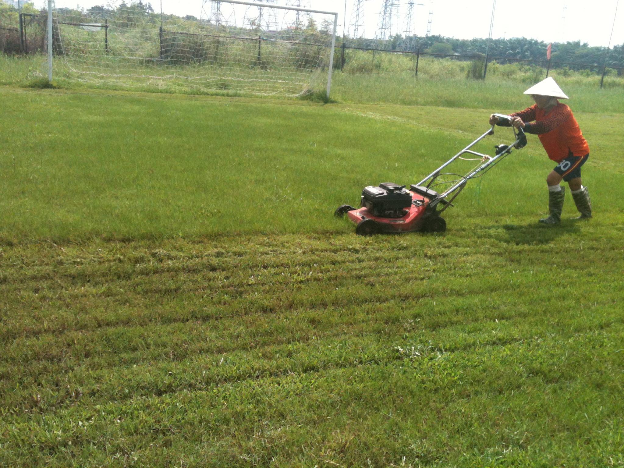 Chăm sóc cỏ thảm