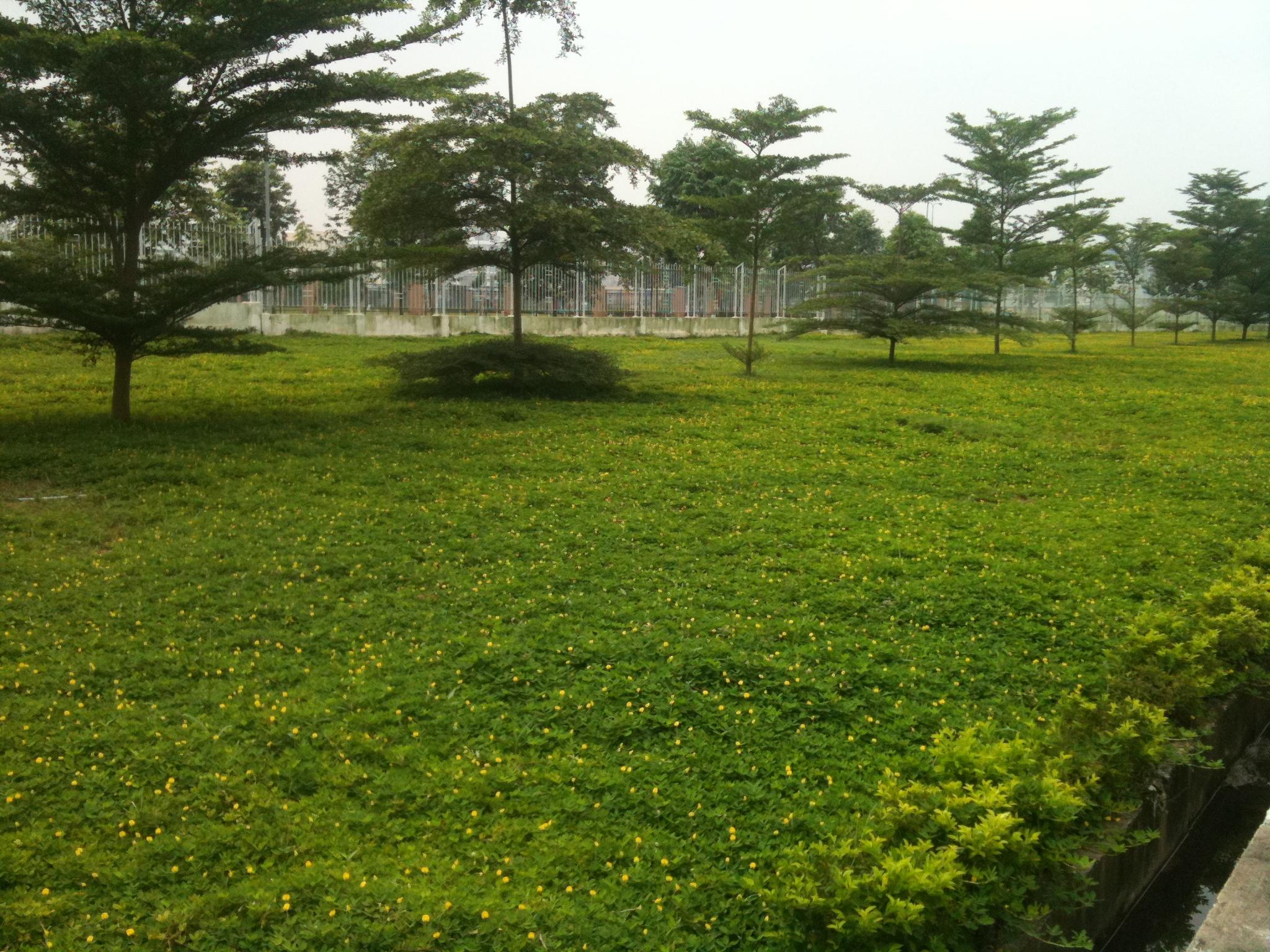 thảm cỏ đậu