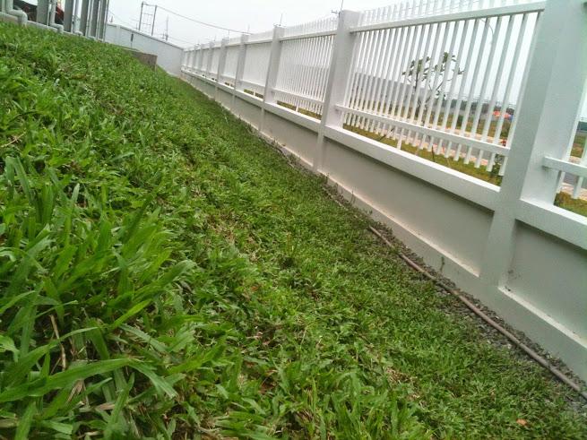 trồng cỏ taluy