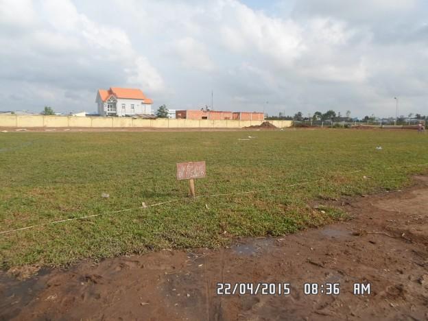 trồng cỏ lá gừng sân bóng đá