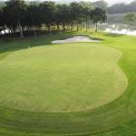 Cỏ Sân Golf – Loại Cỏ Dùng Trong Sân Tập Golf Mini