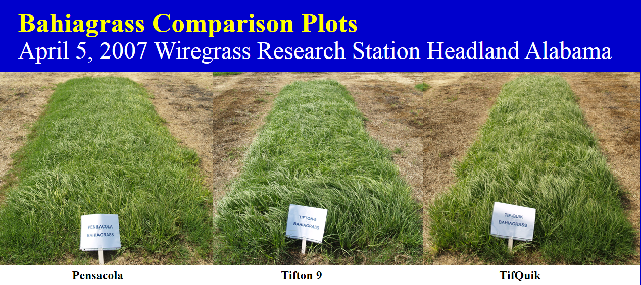Bahiagrass-Comparison-Plots
